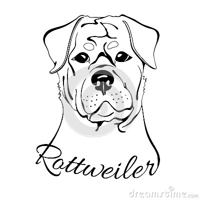 Rottweiler Dog Head Stock Vector Image 71012155