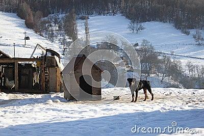 Rottweiler house