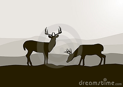 Rotwildschattenbild