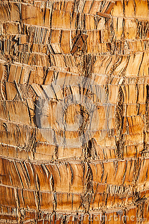Free Rough Brown Palm Tree Wood Bark Natural Texture Background. Royalty Free Stock Image - 37194596