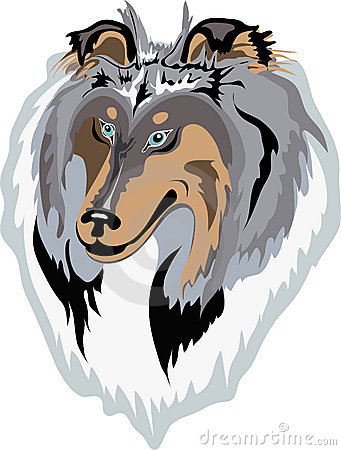 Rough collie vector(blue-merle)