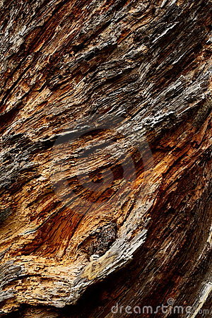 Free Rough Textured Tree Bark Royalty Free Stock Photo - 14202675