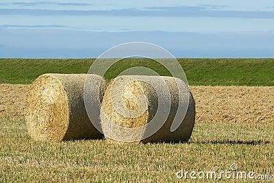 Round bales of hay