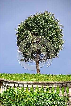 Round-cut tree