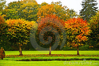 Round-Cut Trees in Autumn