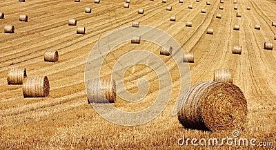 Round Hay Bails
