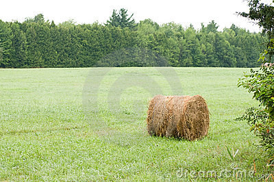Round hay bale in field
