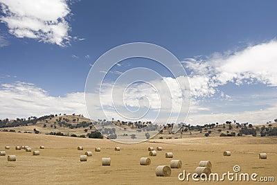 Round hay bales in Australian farm landscape