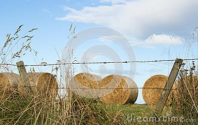 Fence and hay bales