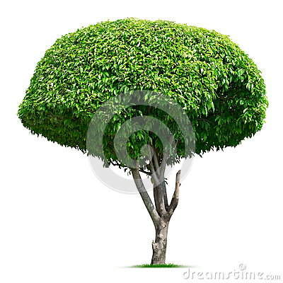 Round ornamental tree