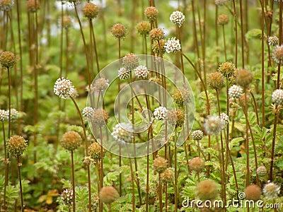 Round plants