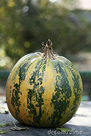 Round pumpkin