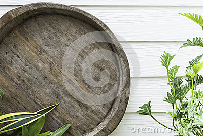 Round rough wood with green plant