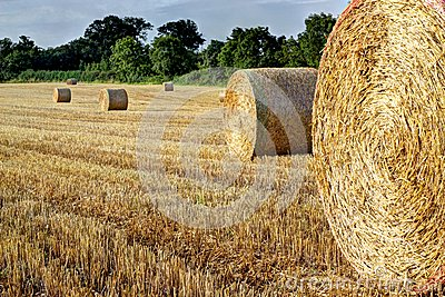 Round straw bales in a field. Hdr.