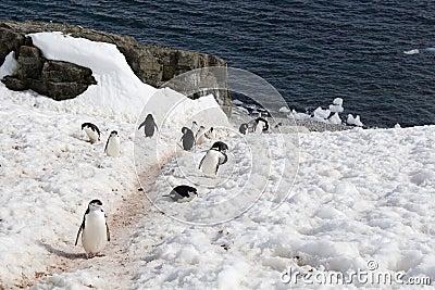 Route de pingouin