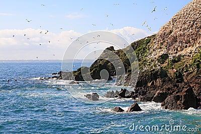 Rouzig island