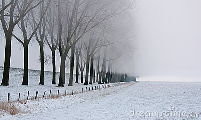 Row of bare trees in morning mist