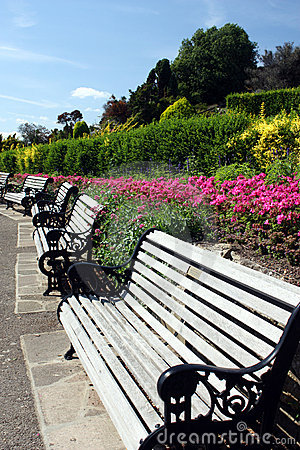 Row of benches in summery park