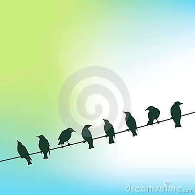 Row of birds on wire