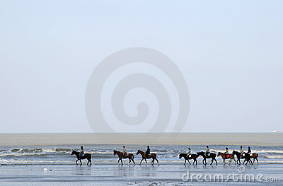 A row of horses along the sea