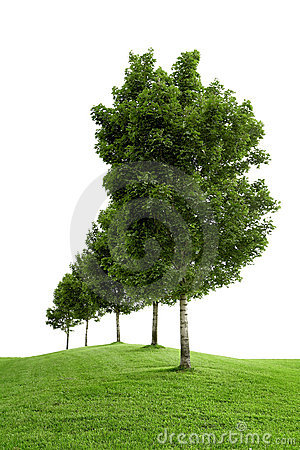 Free Row Of Green Trees Royalty Free Stock Photography - 4215317