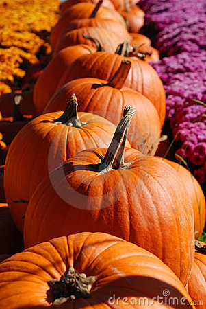 Free Row Of Pumpkins Stock Photography - 6793932