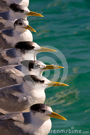Free Row Of Seagulls By Sea Royalty Free Stock Photography - 26017427