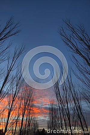 Free Row Of Trees 2 Stock Photos - 1524483
