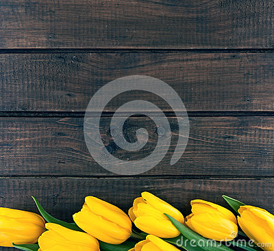 Free Row Of Yellow Tulips On Dark Rustic Wooden Background. Spring Fl Royalty Free Stock Images - 70092889