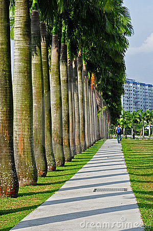 Row of palm tree in the park