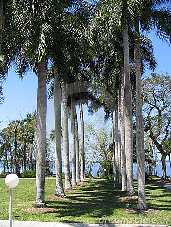 A Row of Palm Trees