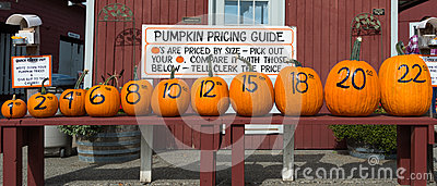Row of Pumpkins and Prices