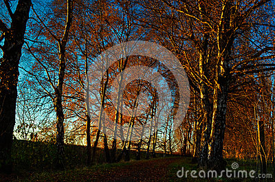 Row of trees in the Autumn at Sunset