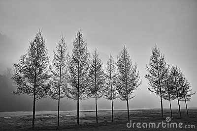 A row of trees in black and white