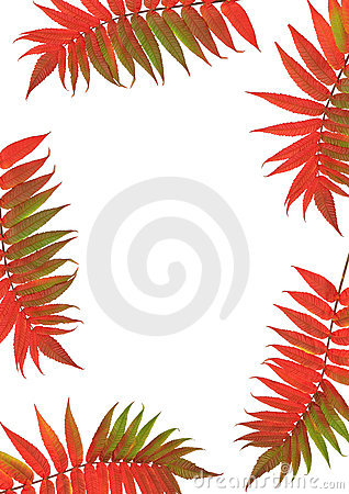 Free Rowan Leaf Beauties Stock Photos - 4479563