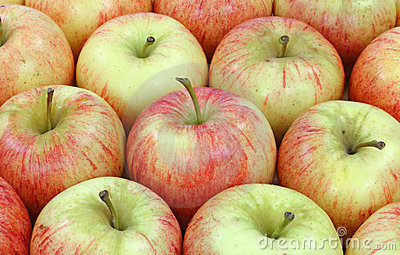 Rows gala apples