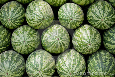 Rows of large watermelon on sale