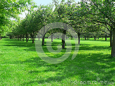 Rows of trees at Brooklyn Botanic Garden Editorial Image
