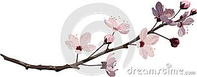 Różowy kwiat wiśni i czereśni