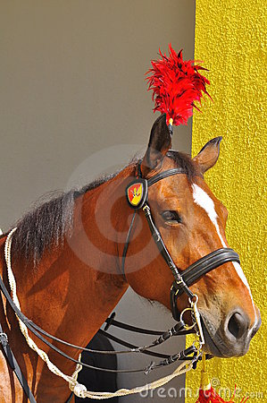 Royal horse guarding the palace Editorial Stock Image