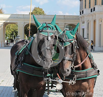 Royal horses at Schonbrunn, Viena Stock Photo