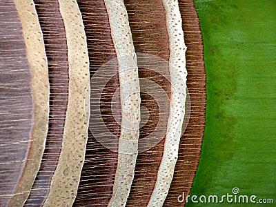 Royal palm bark abstract