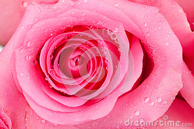 Roze nam toe