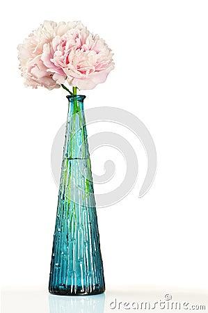 Roze pioenbloemen in blauwe vaas over wit
