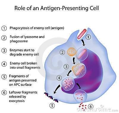 RPA dans l immuno-réaction
