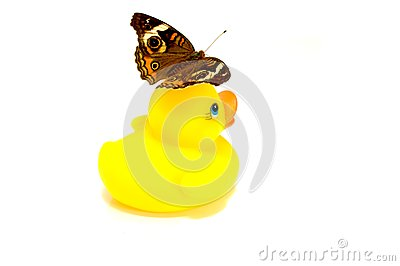 Rubber Duck and Butterfly
