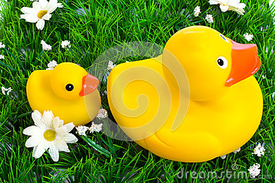 toy duck and duckling