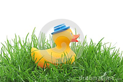 Rubber duck in grass