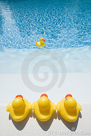 Rubber ducks in the pool