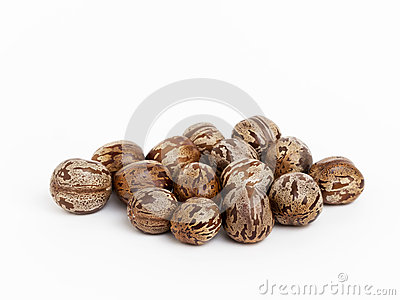 Rubber seeds